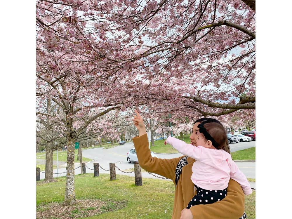 カナダ・バンクーバーにて 春には多くの桜が咲く くらしと仕事